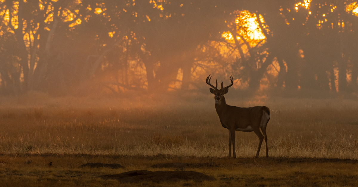 The Best Scopes for Deer Hunting
