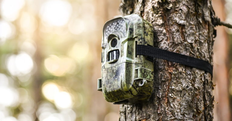 Our Favorite Trail Cams for Hunters