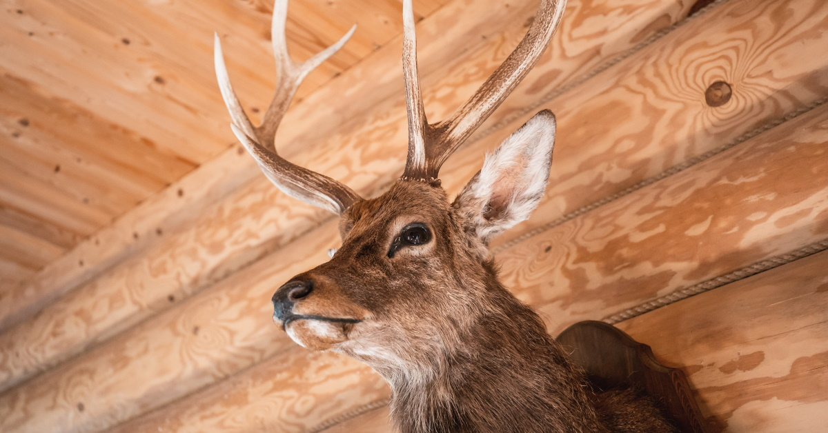 What to Look for When Choosing a Taxidermist