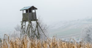 The Best Locations for a Deer Blind